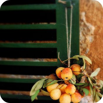 Apricots_in_majorca