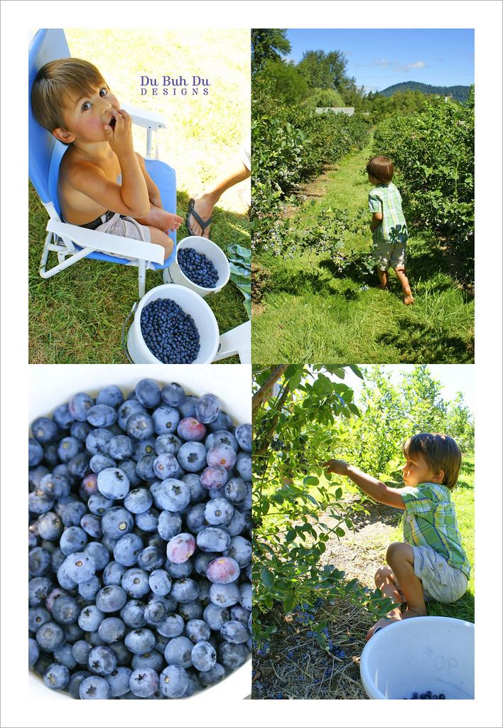 Blueberryfarm