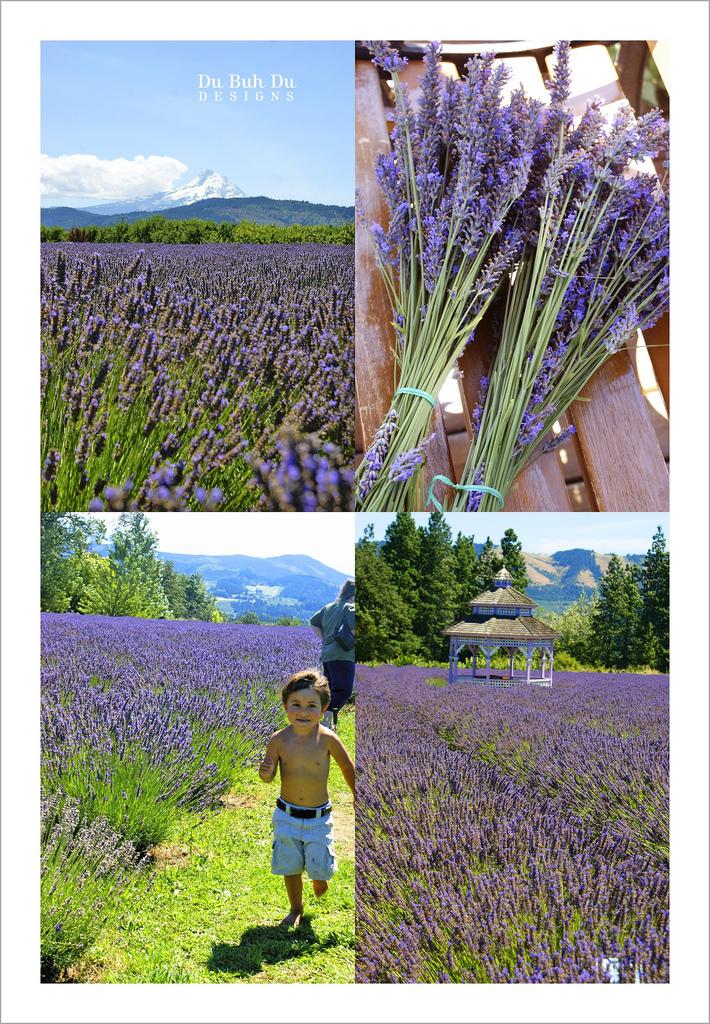 Lavendervalley