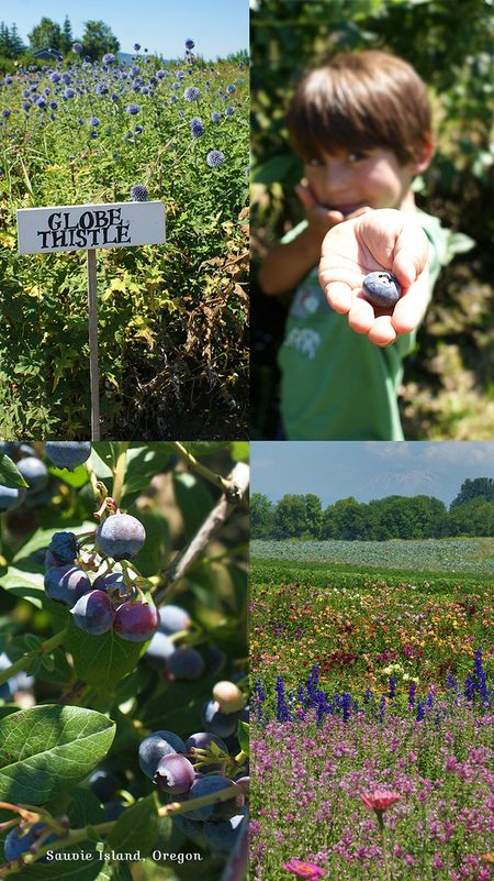 Sauvie_Island_Berrypicking